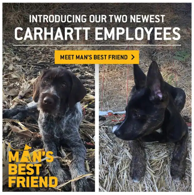 newsletter-ideas-pet-pictures-carhartt